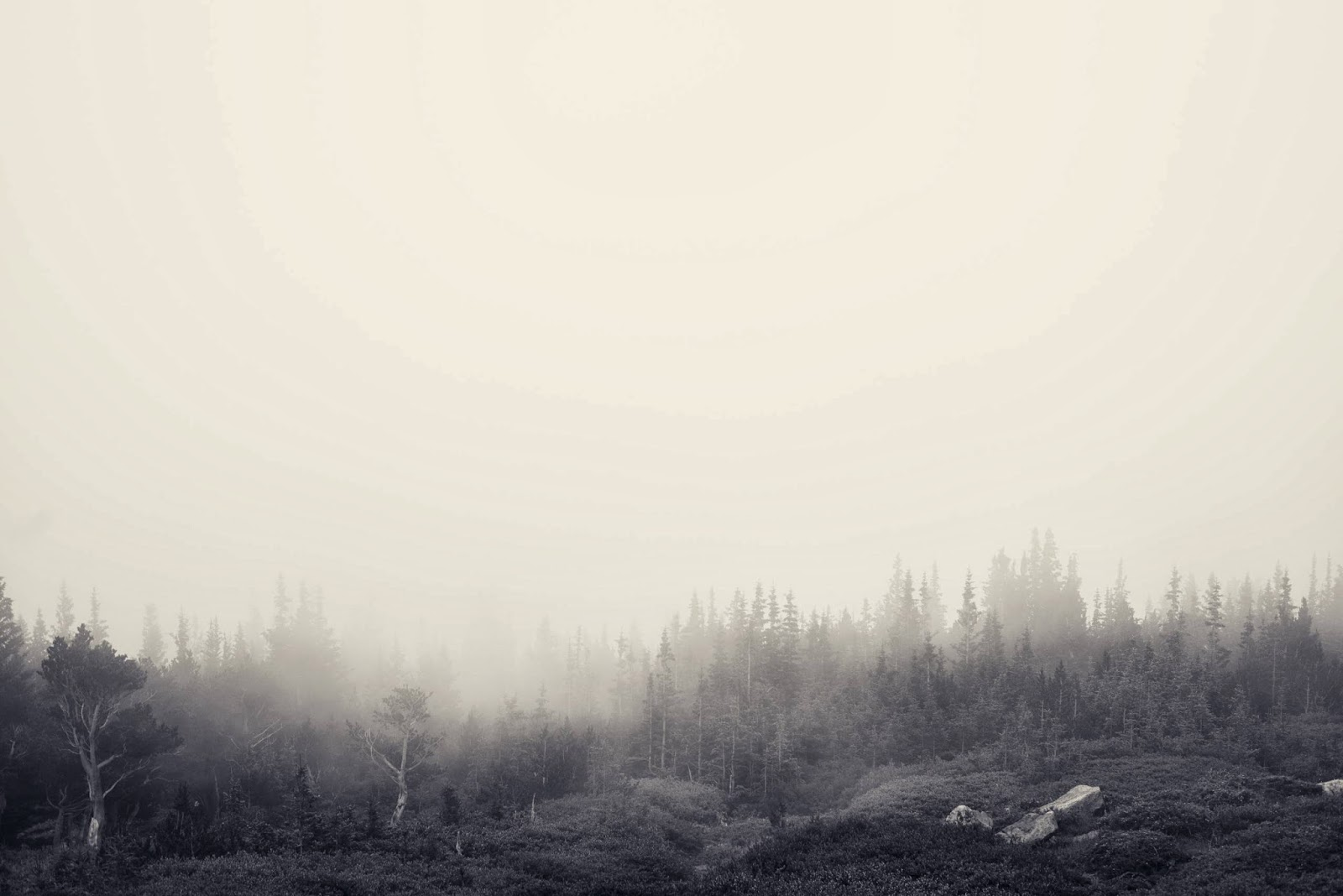 Foggy Forest Jake Stewart