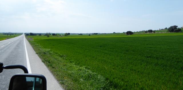 En algun lloc verd entre l'Alta Segarra i el Pla d'Urgell