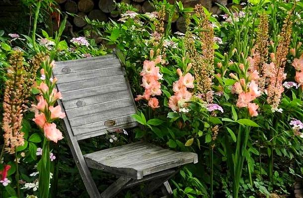 розовые гладиолусы и эремурус