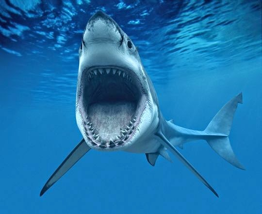 Sonhar com tubarão sonhar que nada com tubarões