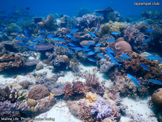 Coral reef in Mioskon island photo: Charles Roring