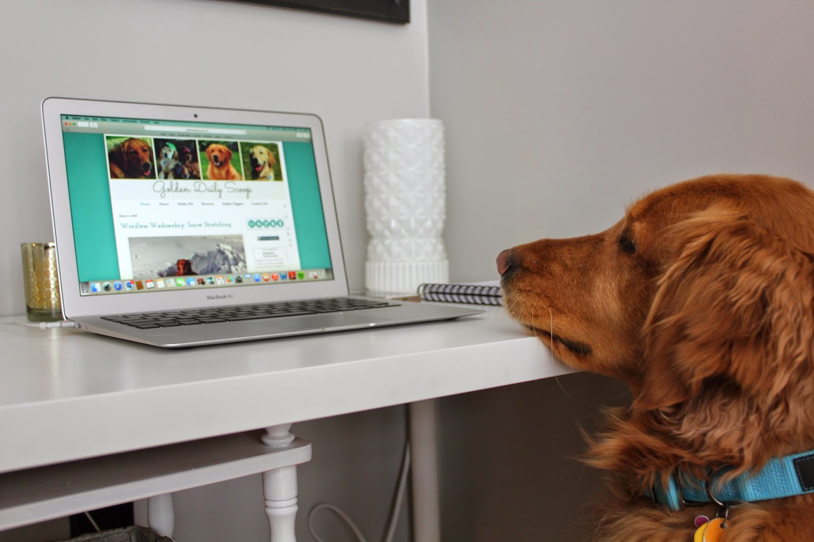dog looking at computer