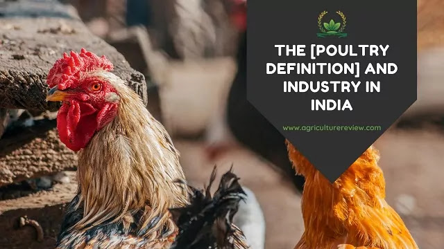 poultry definition