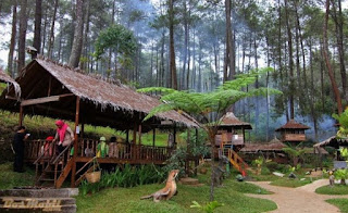 Wisata Dan Harga Ticket Masuk Taman Hutan Jayagiri Lembang