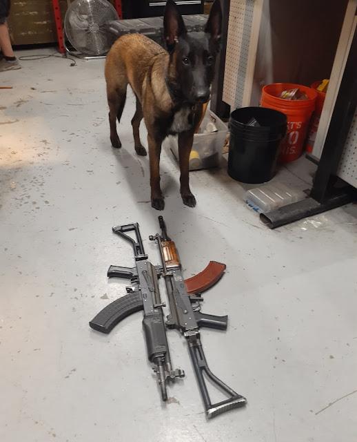 Adorable-Dog-Galil-AK-Stamped