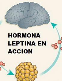 dietas para bajar de peso con leptinal