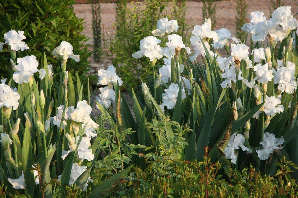 Weißer Garten gartendeko weißer garten