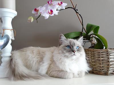 Gato x orquídea