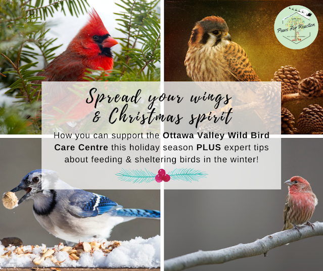 How you can support the Ottawa Valley Wild Bird Care Centre this holiday season PLUS expert tips about feeding & sheltering birds in the winter!