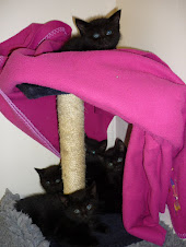 Our abandoned kittens 19/05/11