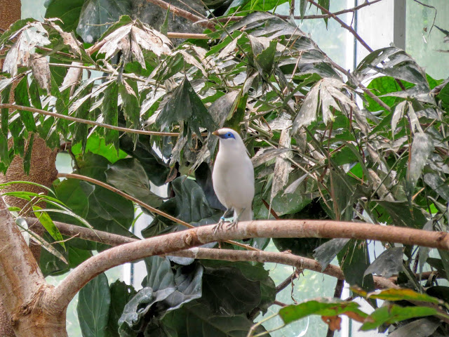 Tropical birds at Pittsburgh's National Aviary