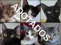 http://oscaesdoparque.blogspot.com.br/2014/03/postagem-r-140.html