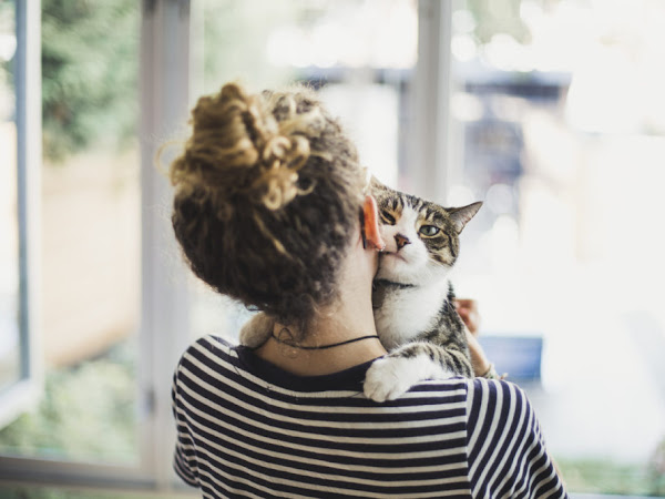 The amazing impact pets have on our mental health