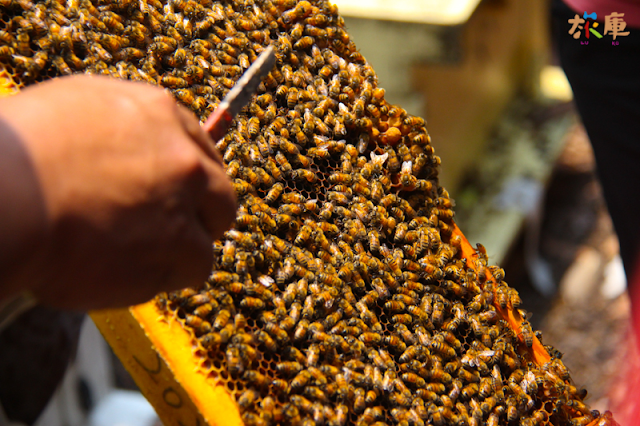 日華養蜂場