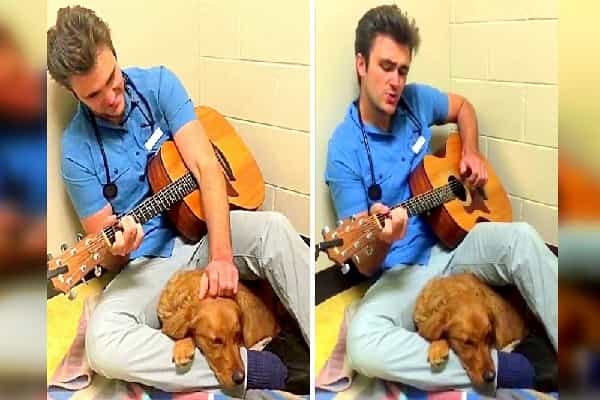 Lovely Vet Relaxes Worried Young Puppy Before Surgical Treatment By Singing To Her