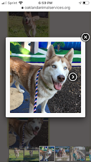 Screenshot of Lucas on the adoption website