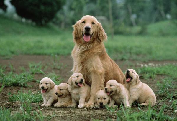 """20 bức hình ấm ấp của các gia đình chó """"giống nhau như đúc"""""""