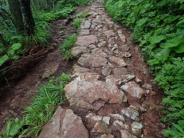 Kamienie na czarnym szlaku (okolice Doliny Białego)