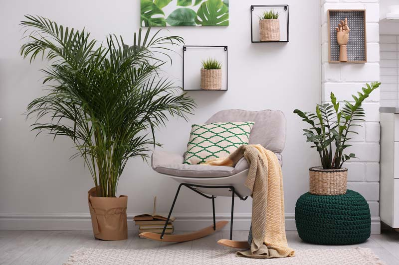 This Is How Houseplants Really Purify Your Air