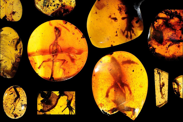 99m-Year-Old Lizard Trapped in Amber Could Give Clue to 'lost Ecosystem'