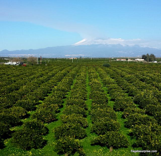Plantações de limão na Sicília no caminho entre Catânia e Agrigento