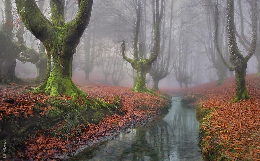 1. Otzarreta Forest, Basque Country, Spain - 22 Mysterious Forests I'd Love To Get Lost In