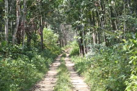 Jungle Track Alas Purwo
