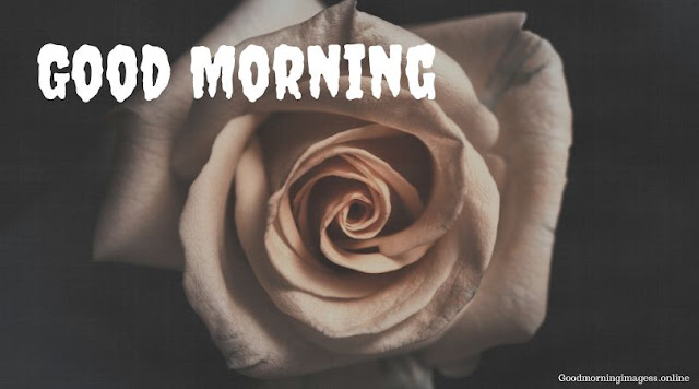 Good Morning Images In Roses 17