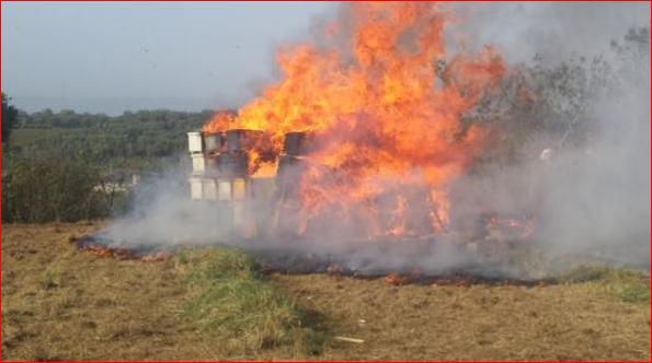 ΣΟΚ: Νέο χτύπημα του μανιακού στην Παύλιανη έκαψε πολλά μελίσσια