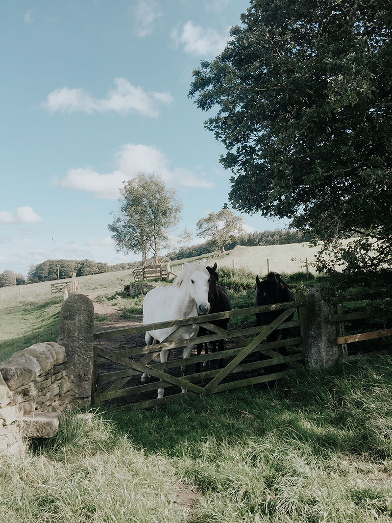 News | Life Lately: A Move to the English Countryside