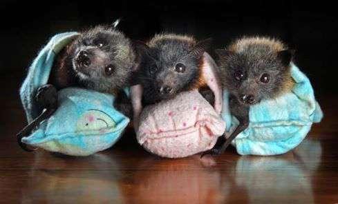 International Bat Appreciation Day Wishes pics free download