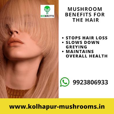 Mushroom Benefits for Hairs
