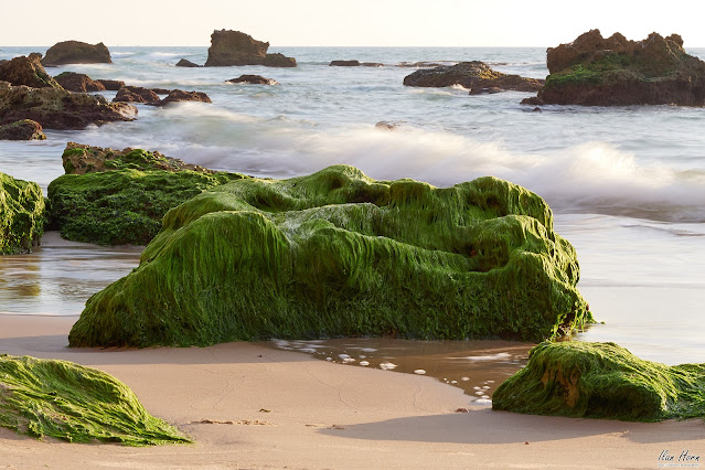 Mossy Rock by the Sea