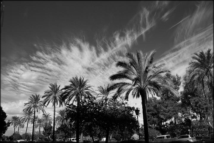 palmeras,valencia,nubes,fotografia
