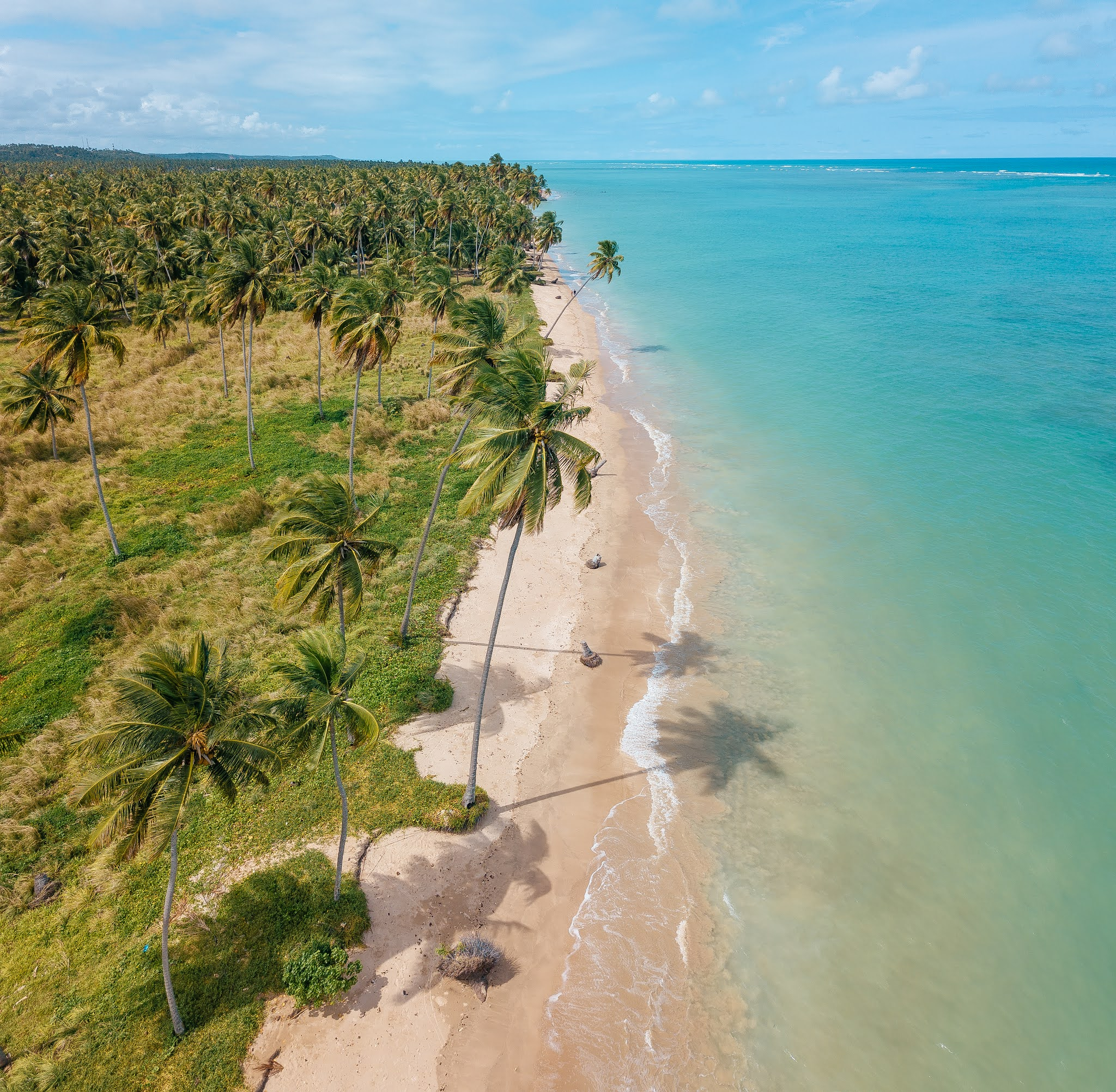 Praia do Patacho em Alagoas é Certificada com Selo Internacional Bandeira Azul