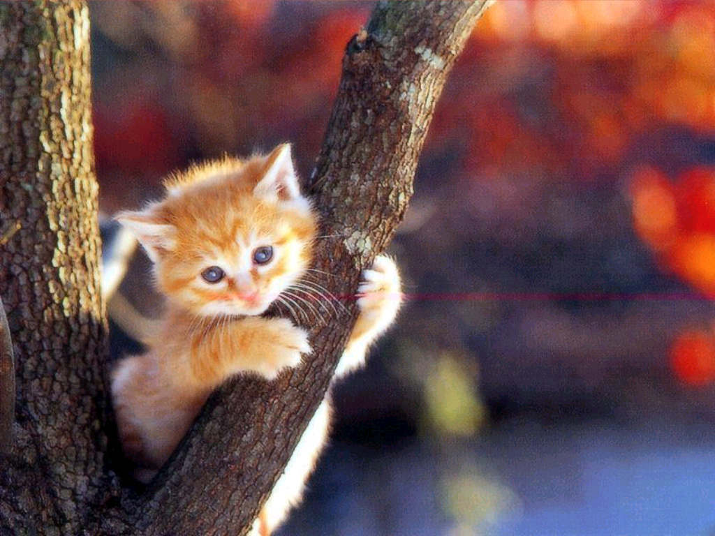 Cute Cat Wallpapers - Entertainment Only