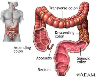 Diagram of large intestine