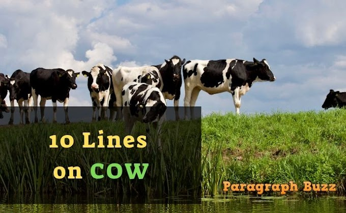 10 Lines on Cow in English for Students