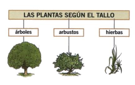 Aula de segundo ceip inmaculada del voto tema 6 las plantas for Tipos de arboles y sus caracteristicas