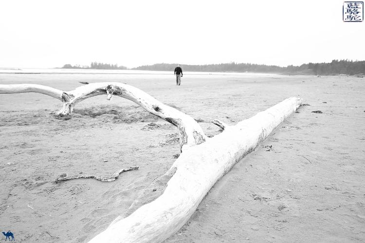 Le Chameau Bleu - Long Beach Pacific Rim Tofino Canada