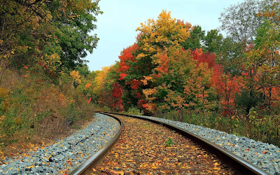 leaves on rail track widescreen hd wallpaper