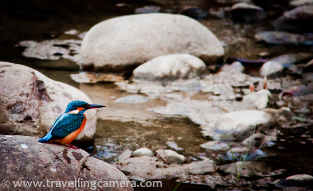 It is in the month of December that the mountains receive their first snow. Delhi sees fogs and cold waves. People retreat into their homes coming out only for Christmas and New Year. Life comes a full circle every year and it is time to stay patient. If winter is not your season, then you need to be like a Kingfisher. Calm, centered, and focused, a Kingfisher waits for hours to make a successful plunge.