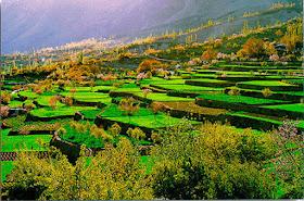 Hunza Terraced Fields