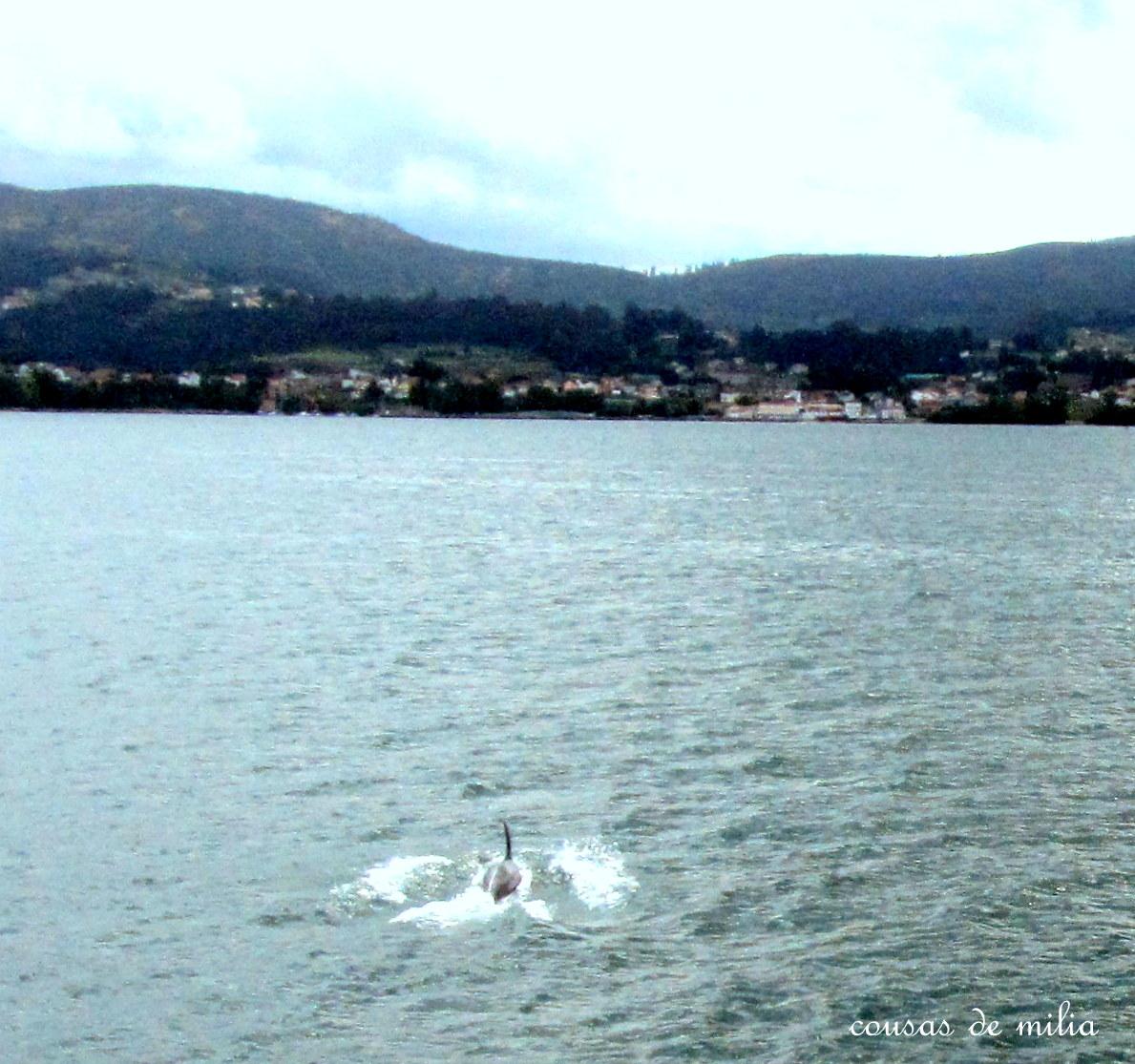 La Visita A La Isla De San Simon Y El Encuentro Con Los Delfines