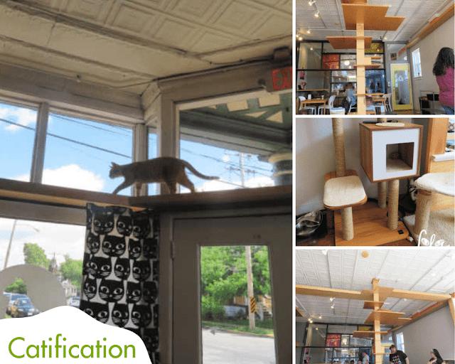 Mauhaus|Cat Café