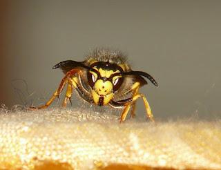 penanganan tersengat lebah