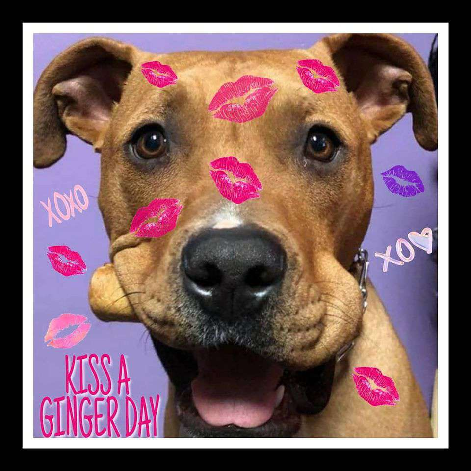 Kiss a Ginger Day Wishes pics free download