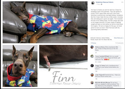 https://www.facebook.com/DobermanRescueOntario/