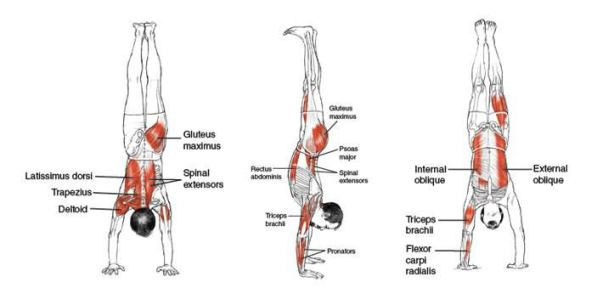 hacer flexiones de brazos beneficios