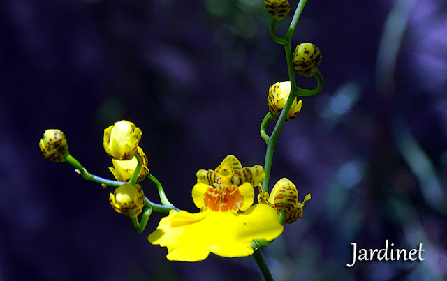 3 dicas fáceis para você simplificar o seu cultivo de orquídeas